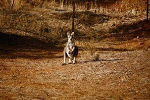 Araba kiralama Tamworth, Avustralya