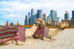 Birleşik Arap Emirlikleri araç kiralama