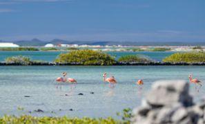 Oto kiralama Bonaire