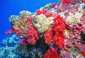 Araba kiralama Coral Coast, Fiji