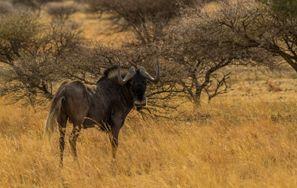 Araba kiralama Mahikeng, Güney Afrika