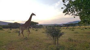 Araba kiralama Rustenburg, Güney Afrika