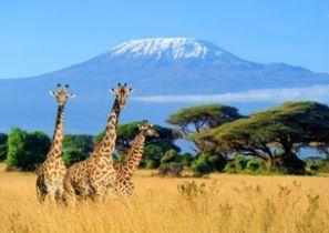 Oto kiralama Kenya